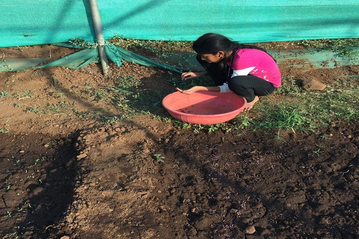 Pebble Creek Life School-Plantation