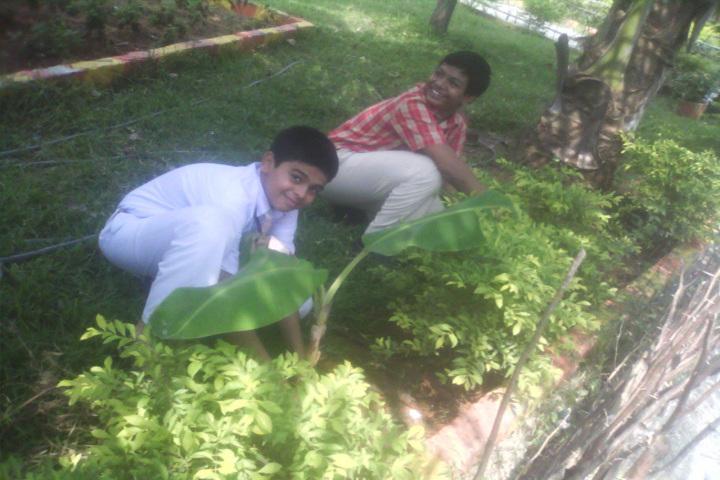 Silver Bells Central School-Tree Plantation
