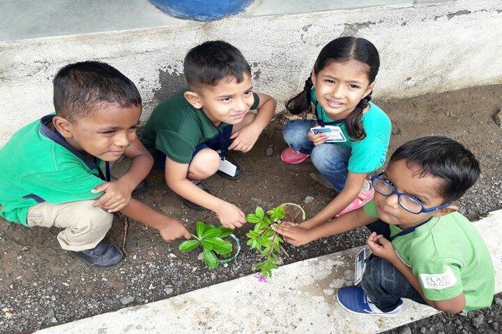 Vibrant School Of Excellence-Tree Plantation