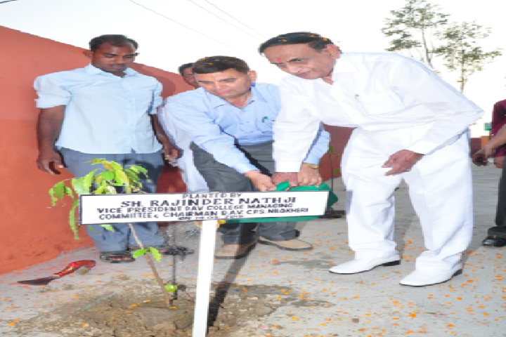 Dav Centenary Public School-Tree plantation