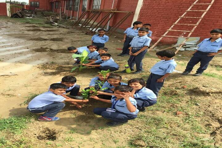 Delhi Heritage International School-Plantation