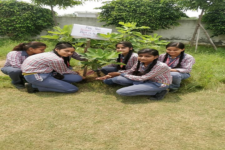 Paramhansa Senior Secondary School-Tree Plantation