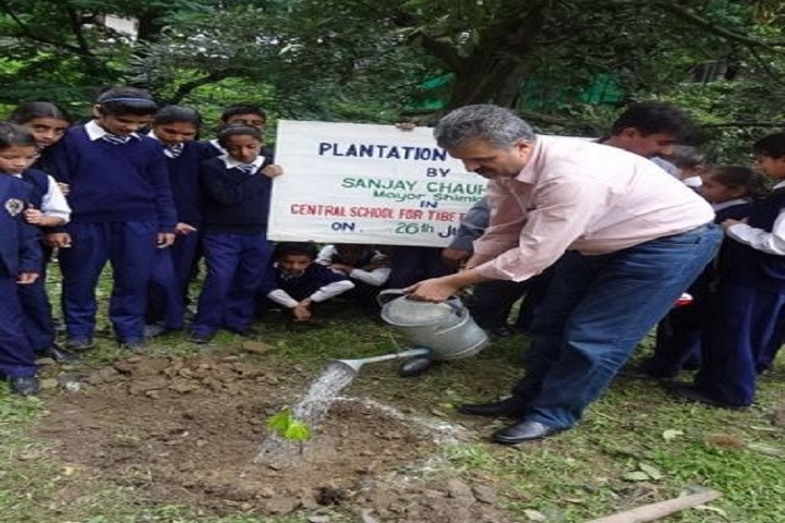 Central School For Tibetans-Plantation
