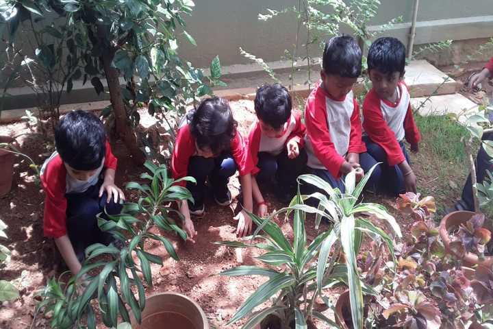 Frank Public School-Plants Day