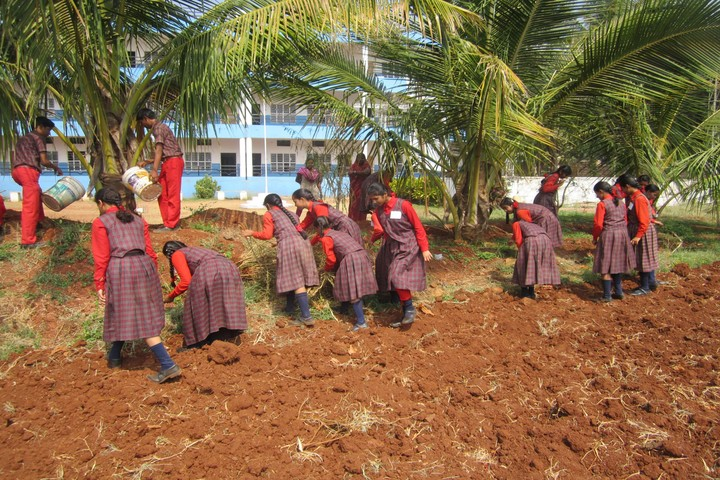 Holy Shephard Higher Primary School-Plantation