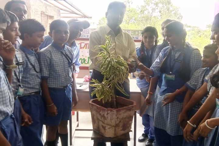 S J P N Trust School-Plantation