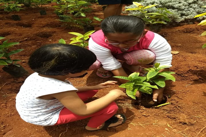 The Deens Academy-Tree Plantation