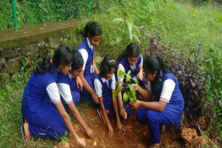 Carmel Public School-Tree Plantation