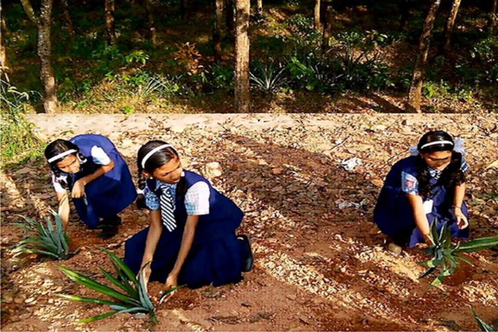 Carmel Residential School-Tree Plantation