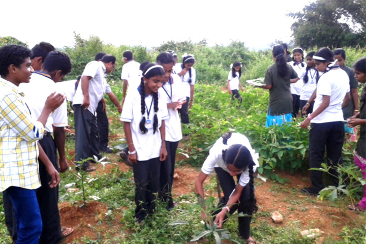 Mount Thabore Central School-Activity